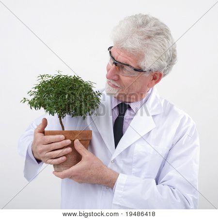 cientista sênior, segurando a pequena árvore em vaso