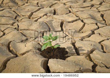 small plant in a cracked soil