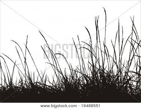silueta de vector de hierba
