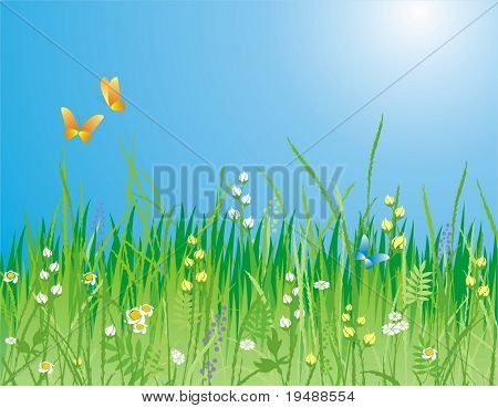 Flowers, grass and butterfly. A beautiful meadow! Ideally for your use