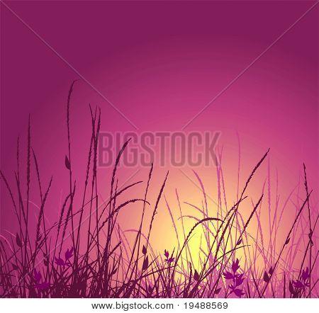 Gras-Vektor-Silhouette und Sonnenuntergang. Ideal für den Gebrauch im design