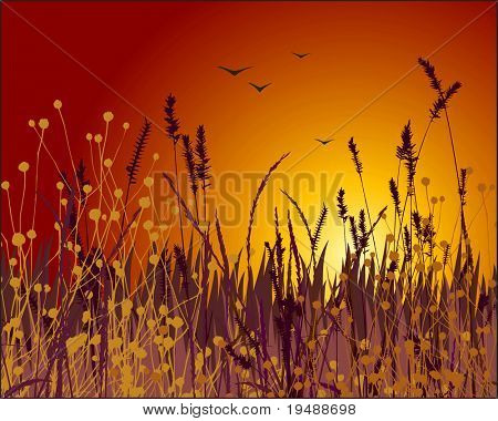 Grass vector silhouette and sunset. Ideally for your use in design.