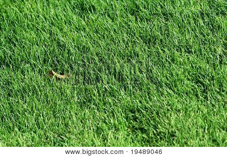 Fresh green grass. Ideally for your use