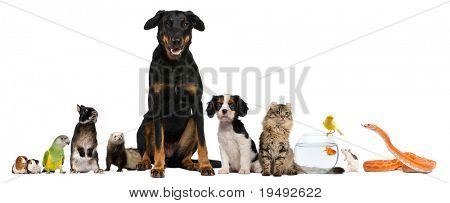 Grupo de mascotas enfrete de fondo blanco