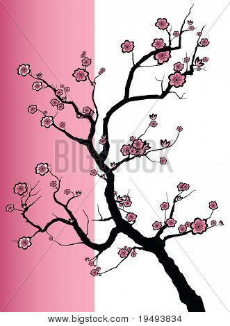 Vector illustration of a Japanese cherry tree in blossom