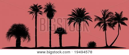 Collection of very detailed vector palm trees silhouettes