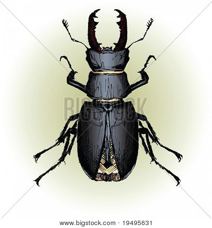 Vector illustration of Lucanus cervus (Stag beetle) (hand drawing)
