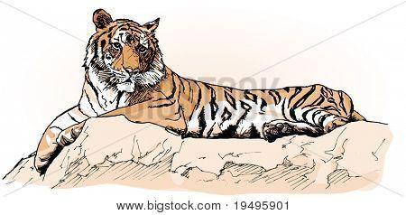 Vector ilustración de un tigre tendido sobre una roca (dibujo a mano)