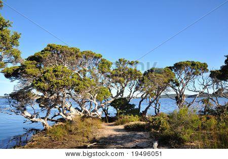 Coastline landscape in Flinders Bay in western Australia
