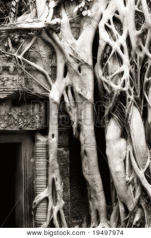 Parasite tree grown over banyan tree with huge roots seized upon ruin walls at Ta Prohm temple, Angkor, Cambodia, infrared-monochrome image.