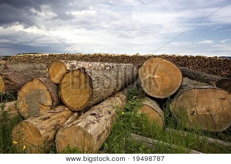 Accumulation of cut tree trunks lying on ground with wood pile in background and cloudy sky.