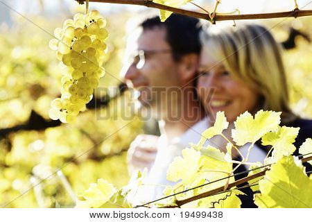 Close-up of bunch of green grapes hanging from vine in vineyard with blurred smiling happy woman and man (couple) in background hugging.