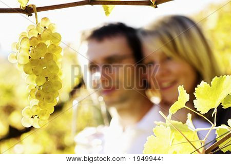 Close-up of bunch of green grapes hanging from vine in vineyard with blurred smiling happy woman and man (couple) in background holding a glass for wine tasting.