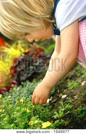 Girl Toddler Studies Yellow Flower In Flower Bed