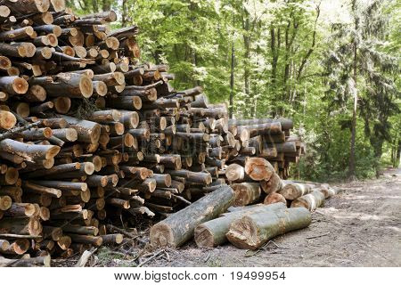 Stack of cut tree trunks lying in mixed forest.