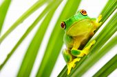 stock photo of tree frog  - Small green frog sitting on palm tree - JPG