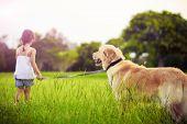 stock photo of girl walking away  - Young girl with golden retriever walking away into sun - JPG