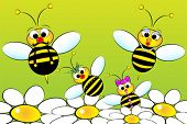 image of bumble bee  - Bee Family - JPG