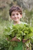 boy holding organic lettuce outdoors