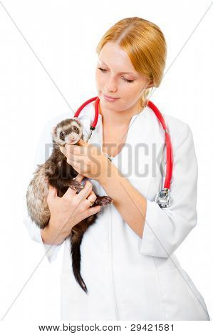 Female vet examines a patient ferret isolated
