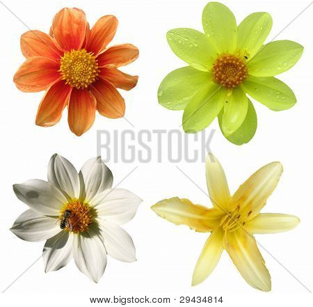 Various isolated flowers