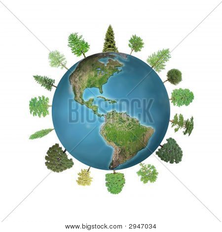 World Forest