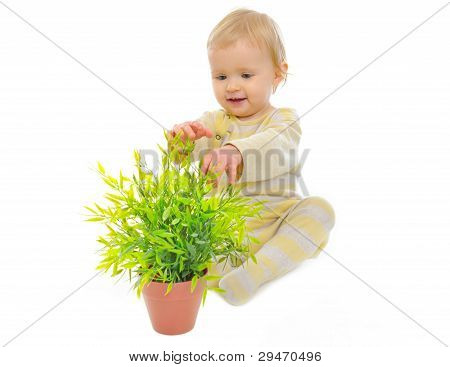 Adorable Baby Playing With Plant In Pot Isolated On White