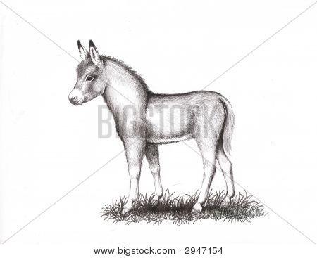 Mediterranean Miniature Donkey