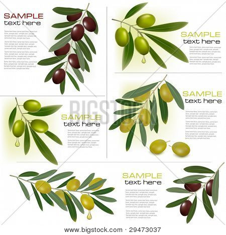 Set of backgrounds with green and black olives. Vector illustration.