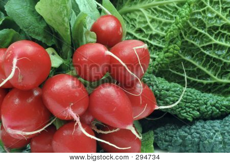 Radishes And Cabbage On Background