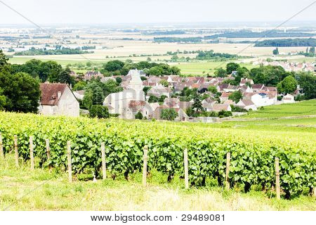 grand cru vineyard near Fixin, Cote de Nuits, Burgundy, France
