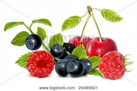 Forest berries. vector illustration.