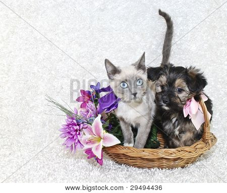 Cute Puppy And Kitten