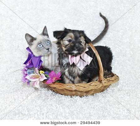 Very Sweet Puppy And Kitten