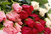 image of rose bud  - Bunch of Roses - JPG