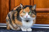 Domestic Angry Cat Sitting In Front Of Entry Door. Kitten Is Pissed Off. Colourful Felis Catus Waiti poster