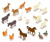 Farm Animals Isometric. Horse And Dog, Cat And Goose, Chicken And Goat, Ram And Duck, Donkey. Domest poster