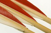 pic of fletching  - red and white fletches of three long bow arrows - JPG