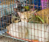 Yellow Cat  In The Cage, Yellow Eye Cat poster