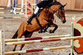 Equestrian On Horse Jumping Obstacle In Competition For Equestrian Sport poster