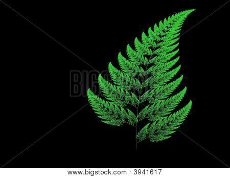 Fern Fractal Image