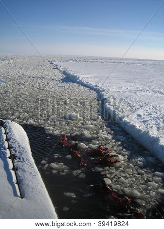 cruising and swimming on frozen sea