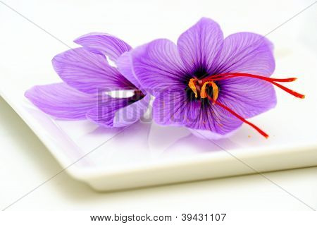 Saffron Flower Closeup