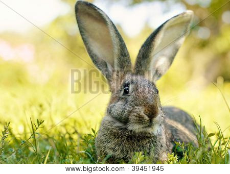 Rabbit on the garden grass