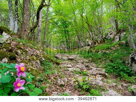 Landscape road Roman Legionnaires in Crimea