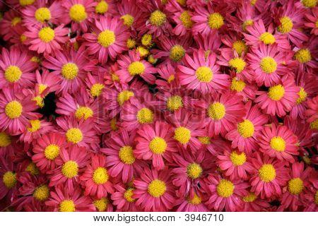Flores como fondo