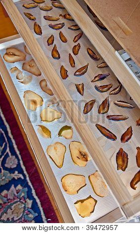 Food Dehydrator With Pears And Italian Prune Plums