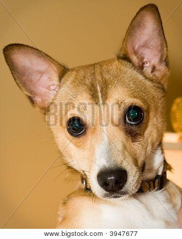 Charlie The Dog