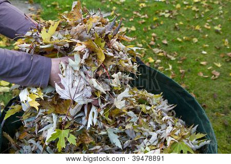 Collecting autumn foliage