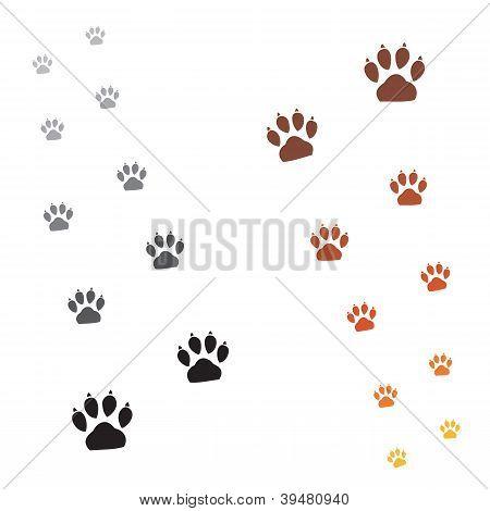 Paws footprints